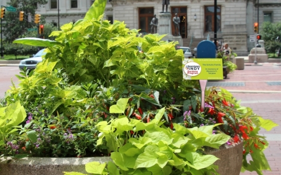 Sponsoring a planter is a great way to show your company or family's support for Downtown Indy's Gardens Program