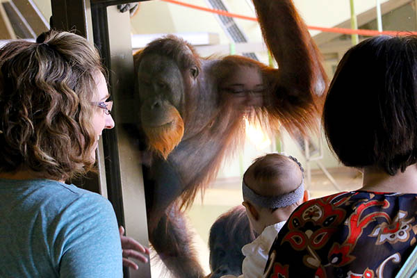 An epic adventure awaits inside the Simon Skjodt International Orangutan Center at the Indianapolis Zoo.
